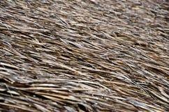 Telhado Thatched Imagens de Stock