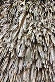 Telhado vegetal das folhas de palmeira Fotografia de Stock