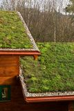 Telhado vivo verde na construção de madeira coberta com a vegetação foto de stock