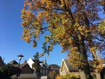 Telhados e uma árvore do outono fotos de stock