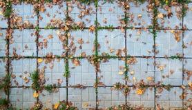 Telhas com folhas fotografia de stock