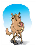 Tellend Paard Royalty-vrije Stock Fotografie