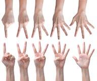 Tellende handen die op wit worden geïsoleerdi Stock Foto's