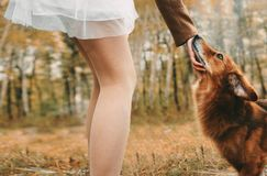Teller auf dem tGirl, das einen Hund streicht fähig stockfotografie