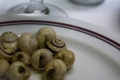 Teller von gekochten Schnecken mit Knoblauch lizenzfreie stockfotos