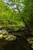 Tellico River, TN Stock Images