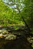 Tellico rzeka, TN Obrazy Stock