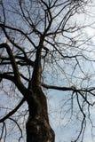 Tem as folhas caídas da árvore Foto de Stock Royalty Free