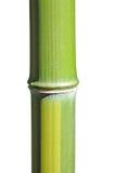 Tem de bambú fotografía de archivo libre de regalías