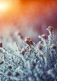 Tema congelato dei fiori Fotografia Stock