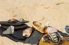 Tema da praia das pedras e das conchas do mar Fotografia de Stock