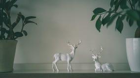 tema das decorações do casamento, flores no interior branco - vintage f Imagens de Stock Royalty Free