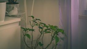 tema das decorações do casamento, flores no interior branco - vintage f Fotografia de Stock