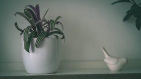 tema das decorações do casamento, flores no interior branco - vintage f Fotografia de Stock Royalty Free