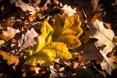 Tema de la naturaleza del otoño Foto de archivo libre de regalías