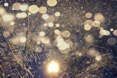 Tema de la Navidad Las ramas de árboles con las linternas y las luces que brillan intensamente Fotos de archivo libres de regalías