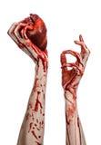 Tema de la sangre y de Halloween: corazón humano que sangra rasgado control sangriento terrible de la mano aislado del fondo blan Foto de archivo