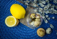 Tema de Pascua, decoración del día de fiesta, limón, pequeños tocones, wi del gatito Imagen de archivo