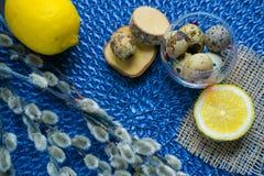 Tema de Pascua, decoración del día de fiesta, limón, pequeños tocones, wi del gatito Imagen de archivo libre de regalías
