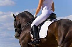 Tema del cavallo: pulegge tendirici, corse di cavallo, velocità. Fotografie Stock