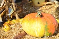 Tema del otoño con la calabaza y el maíz Fotografía de archivo