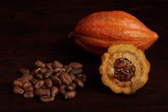 Tema di agricoltura del cacao fotografia stock libera da diritti