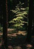 Tema di estate nella foresta Immagine Stock Libera da Diritti
