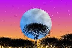Tema di fantasia di notte nella foresta Fotografia Stock Libera da Diritti