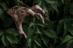 Tema di Halloween e di orrore: la mano sporca terribile con lo zombie nero delle unghie striscia dalle foglie verdi, apocalisse d fotografie stock