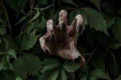 Tema di Halloween e di orrore: la mano sporca terribile con lo zombie nero delle unghie striscia dalle foglie verdi, apocalisse d immagini stock libere da diritti