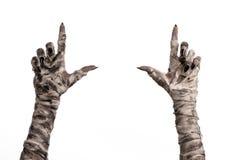 Tema di Halloween: vecchie mani terribili della mummia su un fondo bianco Immagini Stock