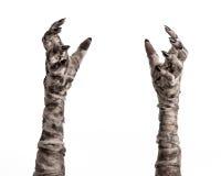 Tema di Halloween: vecchie mani terribili della mummia su un fondo bianco Fotografia Stock Libera da Diritti