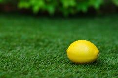 Tema di verdure sano dell'alimento: il limone maturo giallo si trova su un'erba verde Fotografia Stock