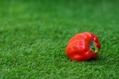 Tema di verdure sano dell'alimento: peperoni maturi rossi che si trovano sull'erba verde Fotografie Stock Libere da Diritti