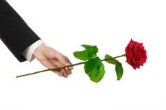Tema do dia de Valentim e do dia das mulheres: a mão do homem em um terno que mantém uma rosa vermelha isolada no fundo branco no Fotografia de Stock