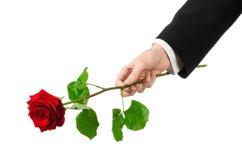 Tema do dia de Valentim e do dia das mulheres: a mão do homem em um terno que mantém uma rosa vermelha isolada no fundo branco no Fotografia de Stock Royalty Free