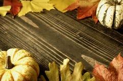 Abóboras e folhas de outono Fotos de Stock