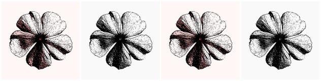 Tema floral - fondo con las flores - Vinca Imagen de archivo