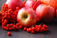 Tema stagionale, mela, zucche e berrie del raccolto degli agricoltori locali fotografia stock libera da diritti