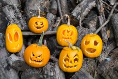 Temas de Halloween La composición de seis talló las calabazas de Halloween en fondo de madera Las calabazas con diverso Halloween Foto de archivo libre de regalías