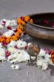 temas de la decoración de la India Rajasthán en una tarde soleada en jaip imagen de archivo