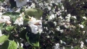 Temat pszczoły zbiory