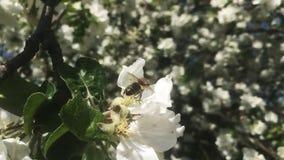 Temat pszczoły zdjęcie wideo