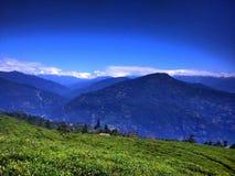Temi茶园,锡金,印度 免版税库存图片