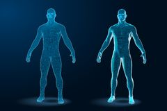 Free Temlate Set Of Human Body 3D Polygonal Wireframe Blueprint. Vector Illustration Stock Photography - 142511532