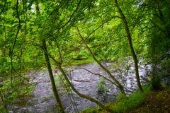 Temor del lago a través del bosque en Argyll y el Bute, Escocia fotografía de archivo