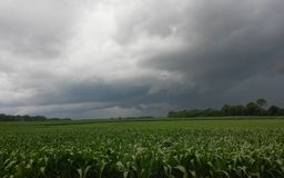 Tempête au-dessus de champ de maïs Photo stock