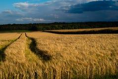 Tempête au-dessus des cultures de blé Photographie stock libre de droits