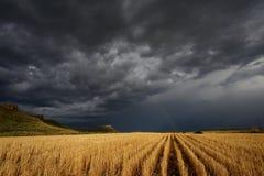 Tempête au-dessus des zones de blé Images stock