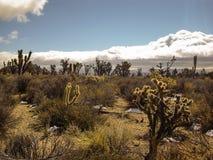 Tempête dans le désert de Mojave image libre de droits